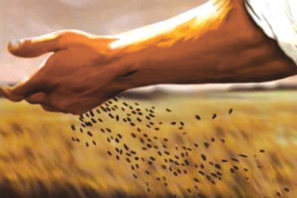 Image result for sowing seeds bible